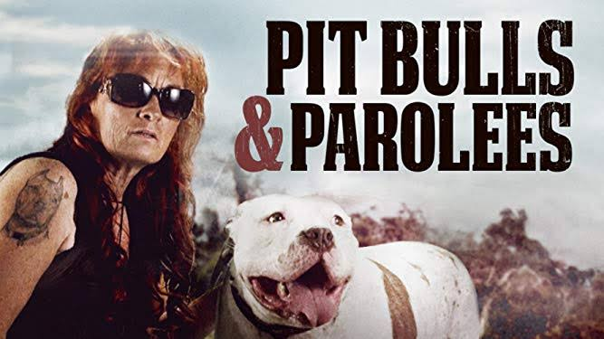 Pit Bulls and Parolees Season 15 episode 8 Release