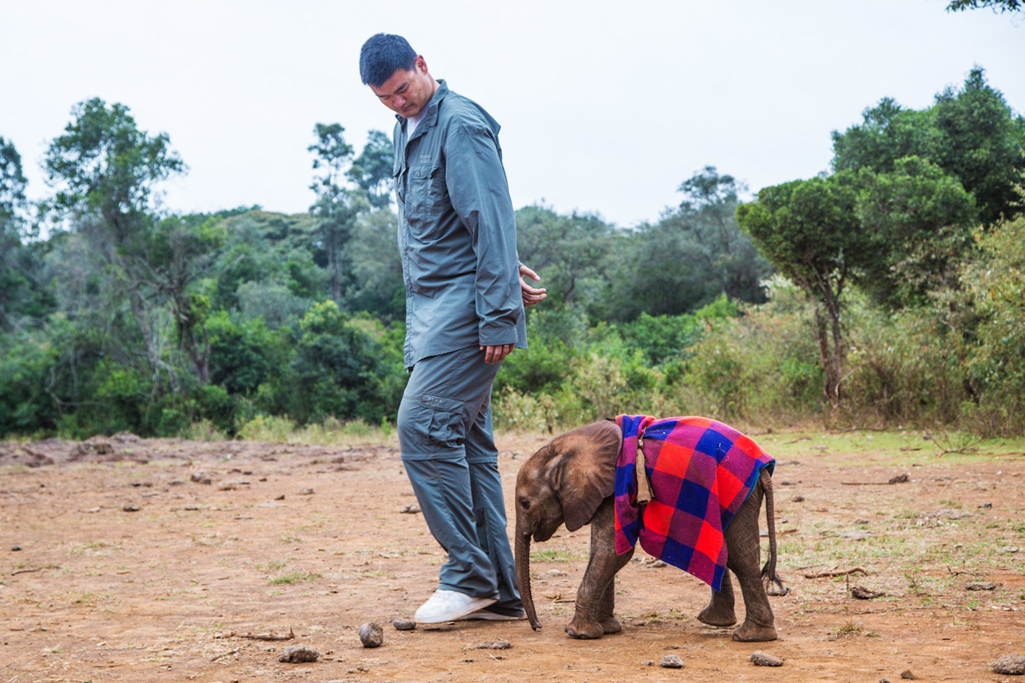 Yao Ming vows to save elephants by ending ivory trade in China