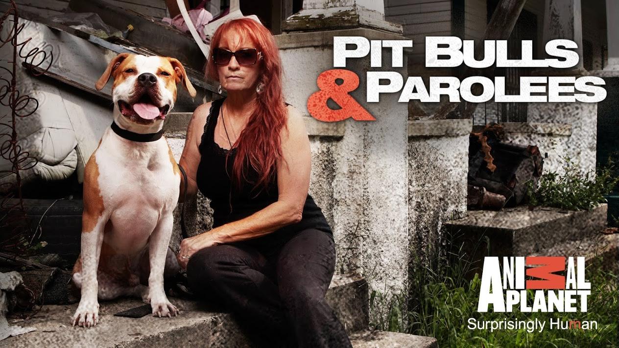 Pit Bulls and Parolees Season 17 Episode 3