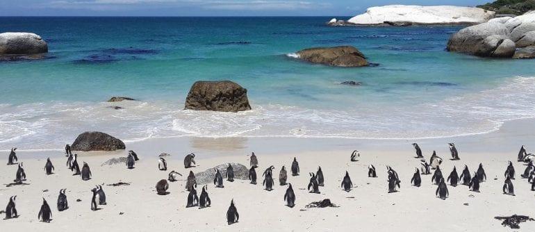 Penguin Town: Netflix Release Date, Plot & Trailer - OtakuKart