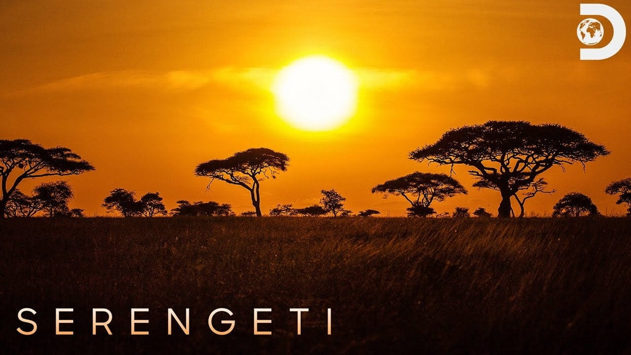 What To Expect From Serengeti Season 2 Episode 1?
