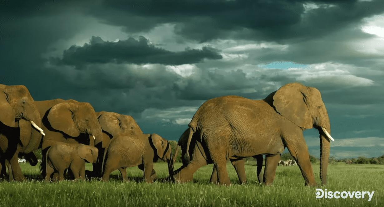 Serengeti Season 2 Episode 1