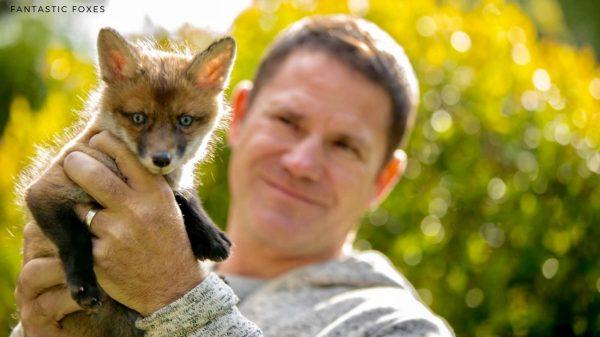 Fantastic Foxes