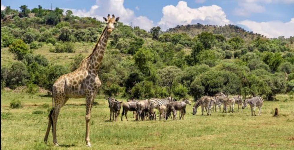 Where was Love on Safari filmed